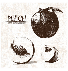 digital detailed peach hand drawn vector image