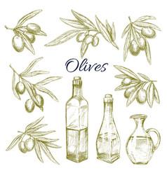 olives olive oil bottles pitchers sketch vector image