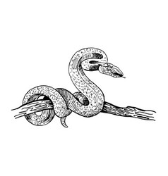 Snake on a tree branch hand-drawn in sketch vector