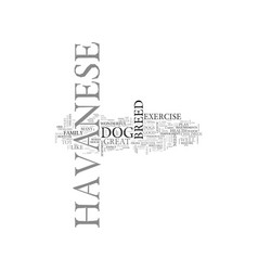 what to expect from a havanese text word cloud vector image vector image