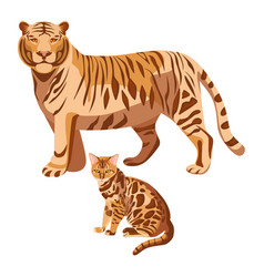 Bengal cats isolated on white big tiger vector
