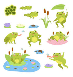 cartoon frogs cute water reptiles funny vector image