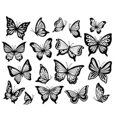 drawing butterflies stencil butterfly moth wings vector image