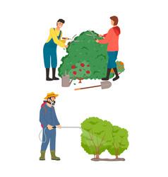 Farming people caring garden bushes shape vector