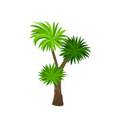 palm tree with green fan shaped leaves plant of vector image