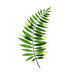 simple palm leaf vector image