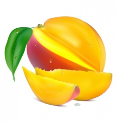 mango with section vector image vector image