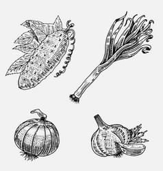 set of hand drawn engraved vegetables vegetarian vector image