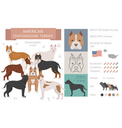 American staffordshire terrier dog isolated vector