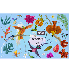 bright tropical birds and flowers vector image