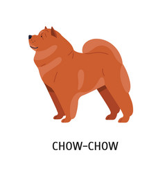 Chow chow cute lovely companion dog with wrinkled vector