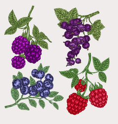 Hand drawn sketch berries set with blackberry vector