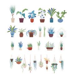 houseplants in pots flat set vector image
