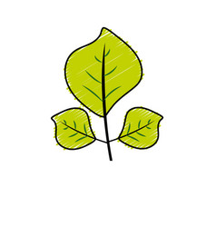 Natural leaves botany of tropical plant vector
