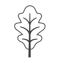 Thin line oak leaf icon vector