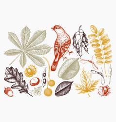 Autumn collection with bird vector