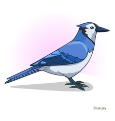Blue jay bird educational game vector