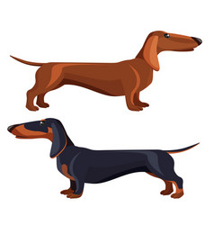 dachshund dog with black fur in various positions vector image