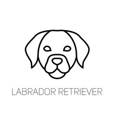 Labrador linear face icon isolated outline dog vector