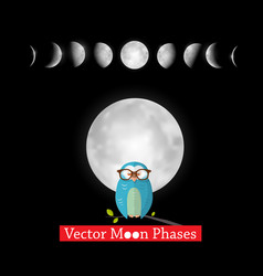moon phases design with owl on black background vector image