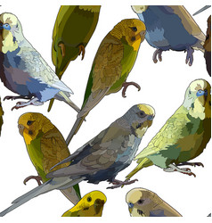 seamless background of parrots vector image