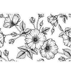 seamless pattern rose flower and leaf hand drawn vector image