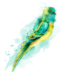 Tropic colorful parrot bird watercolor vector