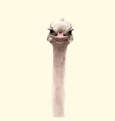 Watercolor ostrich portrait vector