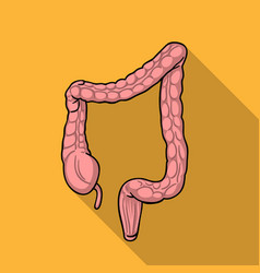 Human large intestine icon in flat style isolated vector