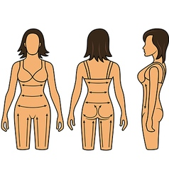 Woman mannequin slimming underwear torso vector image vector image
