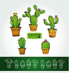Cactuses in flower pot vector