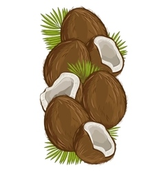 Coconut isolated nut composition vector image