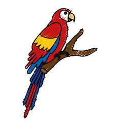 exotic parrot in branch tropical bird vector image