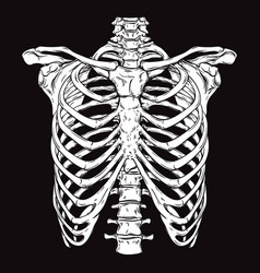 Hand drawn line art human ribcage vector