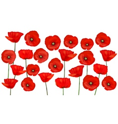poppies background vector image