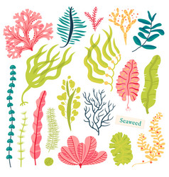 Sea plants and aquatic marine algae seaweed set vector
