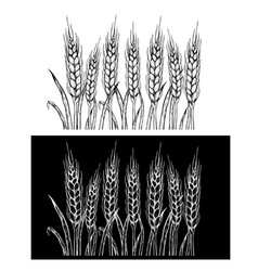 hand drawn set of rye sketch vector image