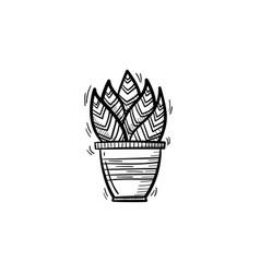 sansevieria trifasciata in a pot sketch icon vector image