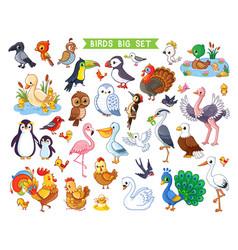 big set with birds in cartoon style vector image