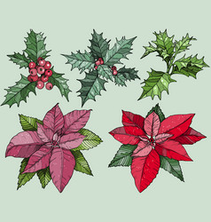 colorful christmas flowers set vector image