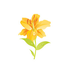 lily flower floral icon realistic cartoon cute vector image
