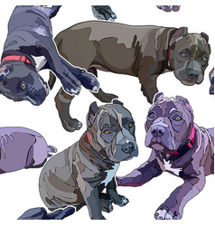 Seamless background with pitbulls vector