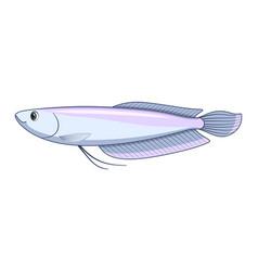 Silver arowana fish on a white background vector