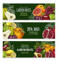 Sketch banners of tropical exotic fruits vector