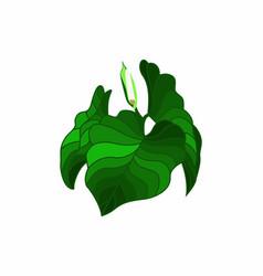 Taro leaves vector