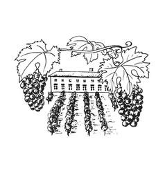 vine plantation grapes hills trees house vector image