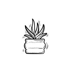 sansevieria trifasciata in a pot sketch icon vector image vector image