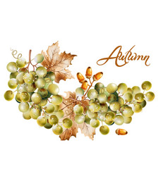 Autumn card watercolor fall harvest grapes vector