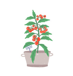 Cherry tomato in pot flat vector