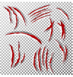 Claws scratches claw scratch mark bear vector